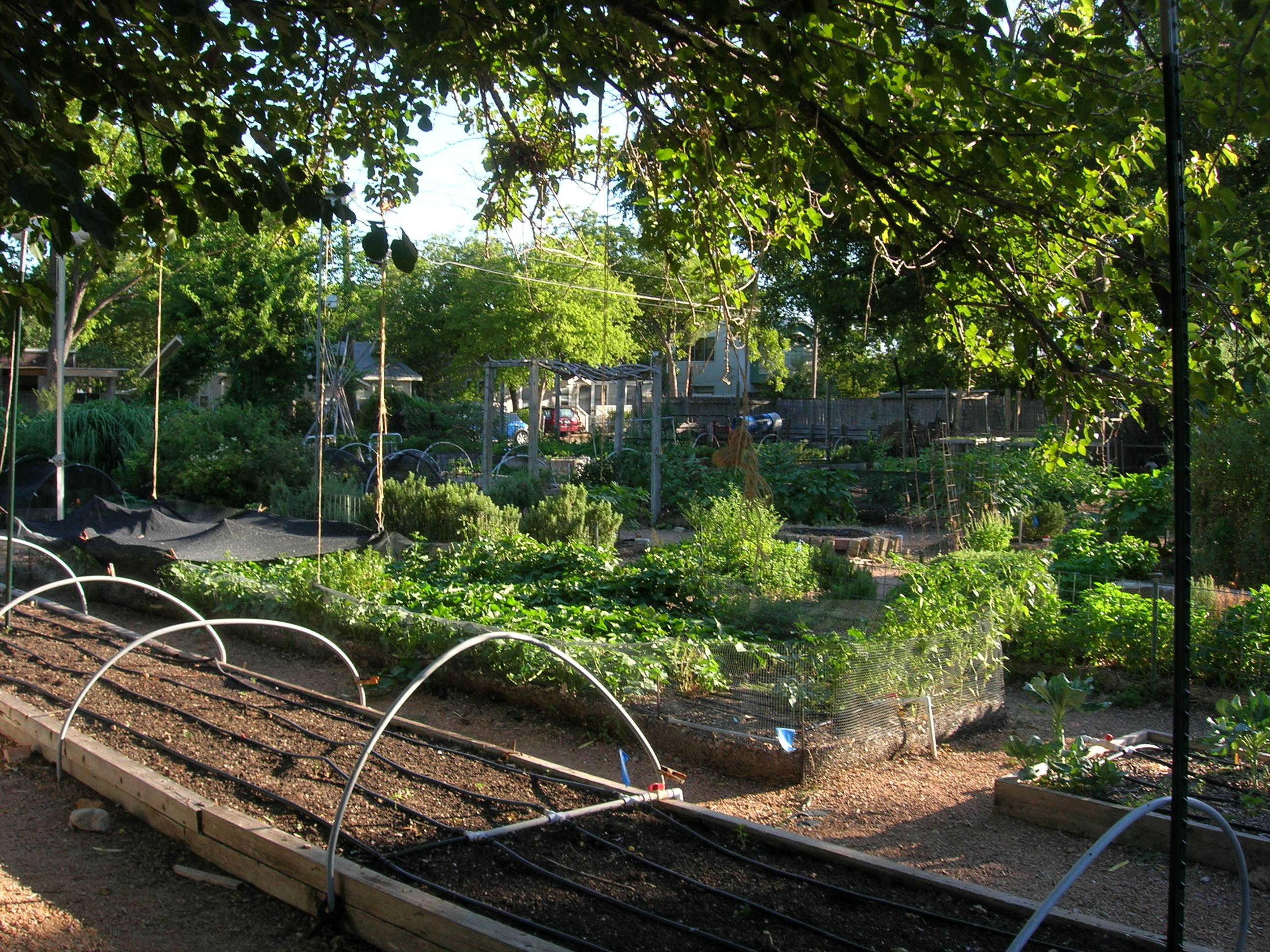 Eastside cafe austin eat the best food in the world for Eastside urban farm and garden